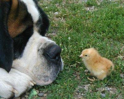 Дети животных..