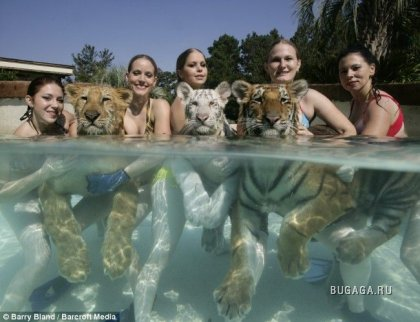 Дрессировщицы в бассейне с тиграми