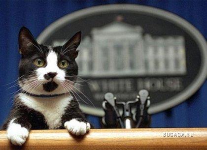 Животные Белого дома