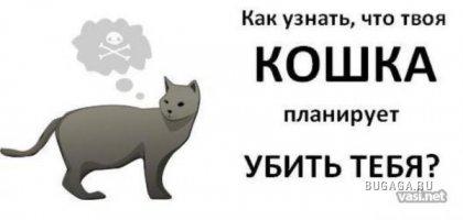 Как узнать что твоя кошка хочет убить тебя?