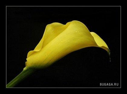 Мыслим в жёлтом цвете