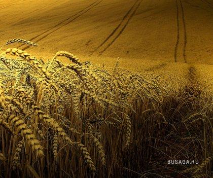 Фотографии природы от Ben Visbeek