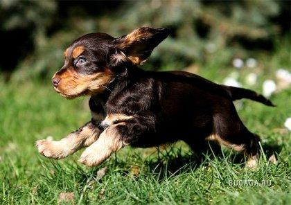 Собаки — красивые стоп-кадры