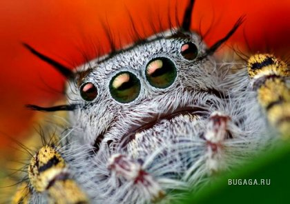 У пауков тоже есть мимика)