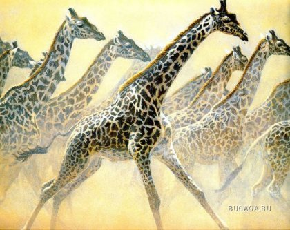 животные сафари от художника-анималиста