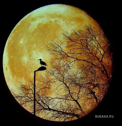 Лучшие фотографии Луны