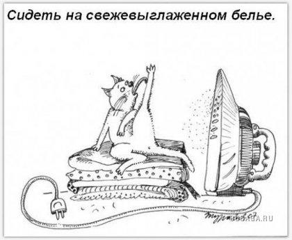 Обязанности кошки в доме