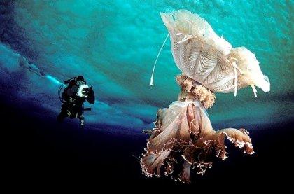 Подводный мир Антарктиды