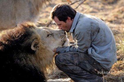 Король джунглей подружился с человеком