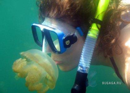 Поцелуй медузы