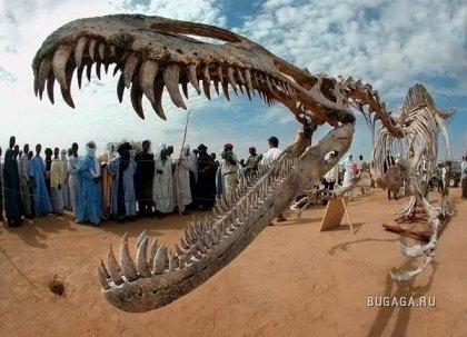 Археологические загадки Сахары