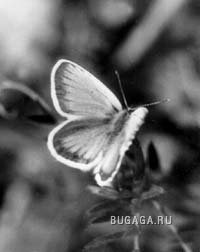 Бабочки...)