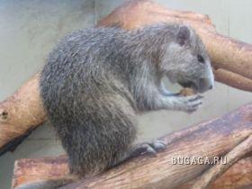 Виды животных, открытых в 2008 году