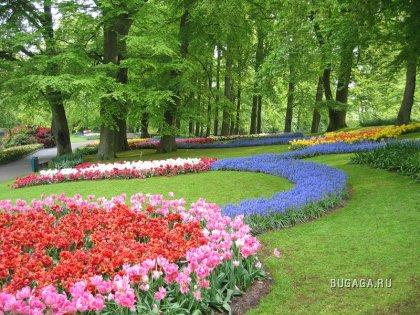 Голландия страна цветов! Страна тюльпанов!