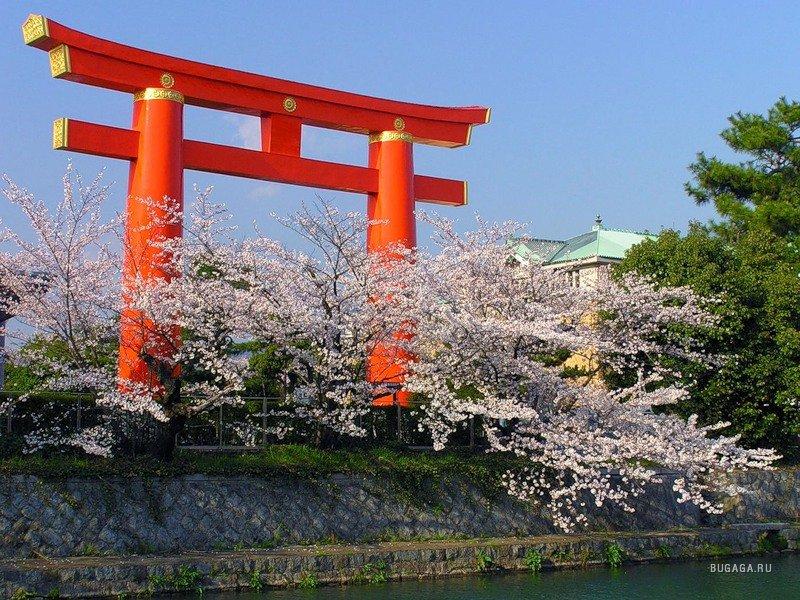 Япония и все что с ней связано