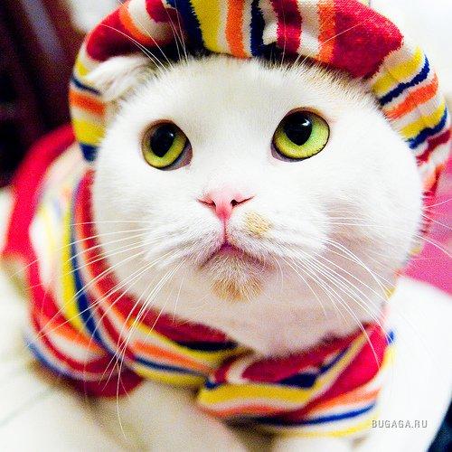 Почему кошка лучше чем женщина