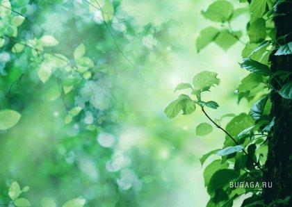 Озеленяем обои