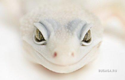 Белее белого