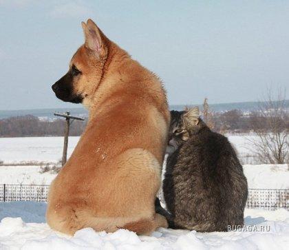 Ещё порция позитива - животные)))