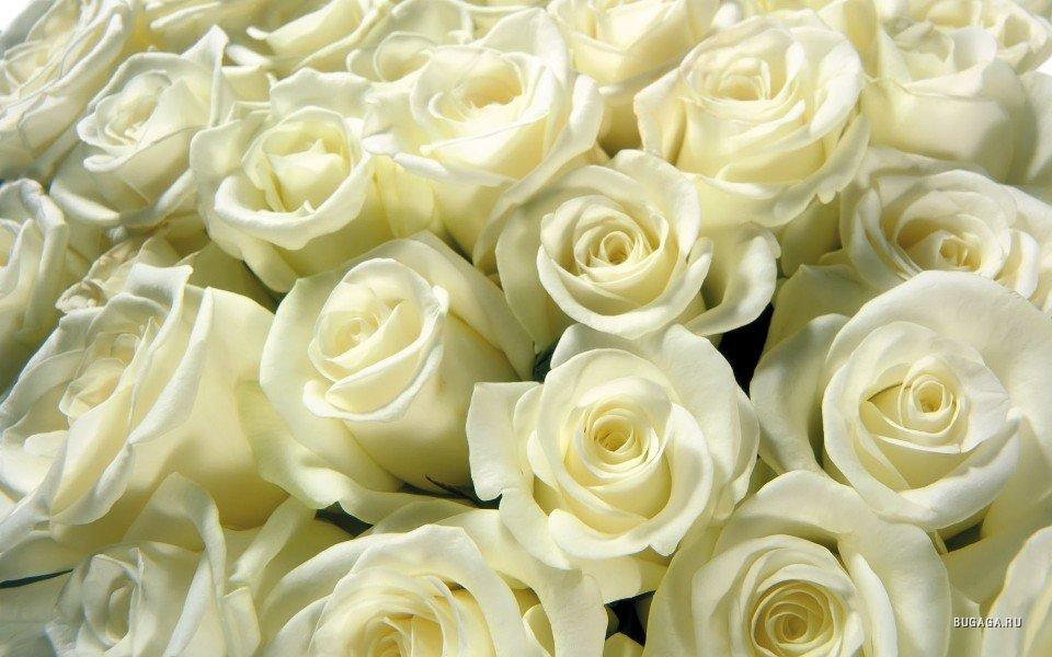 Картинки белых цветов 2