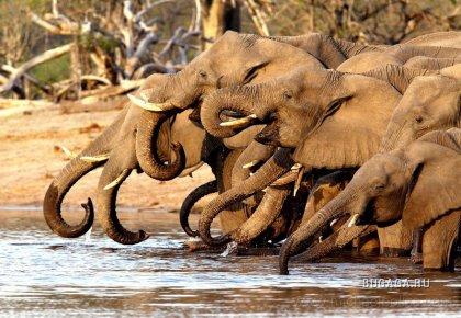 Животный мир Африки глазами фотографа Michael Poliza