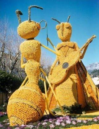 Апельсиновый фестиваль в Голландии (19 фото)