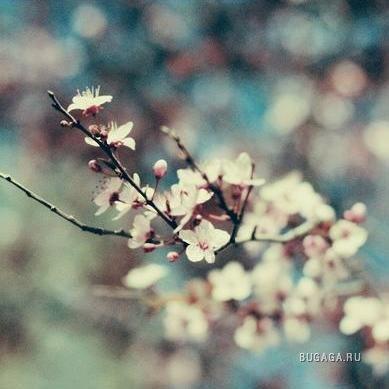 Фотограф Irene L
