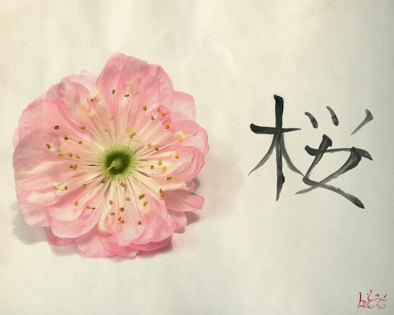 Тройные картинки цветы 2