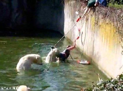 В Берлинском зоопарке женщина прыгнула в вольер к медведям