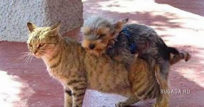 Video: Sorprende a cuidador de su mascota en acto