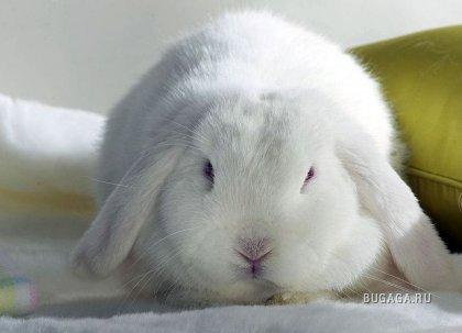 Быстропост: расчленение кролика (слабонервным не смотреть)