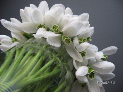 Аккорд белых цветов