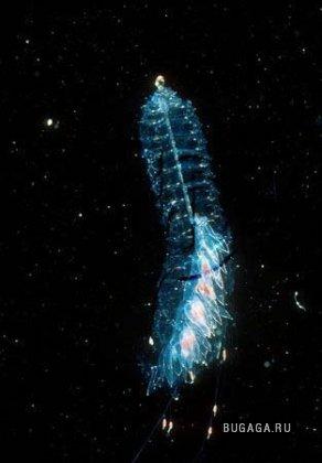 Глубоководный суперорганизм