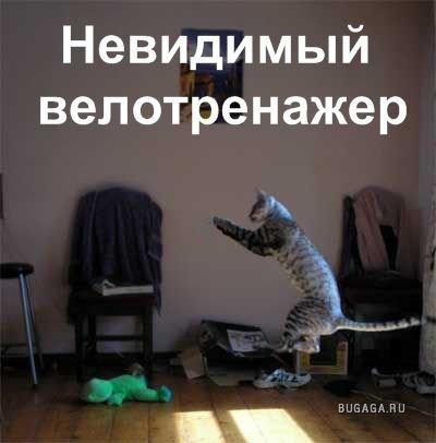 Кошки и невидимые предменты)