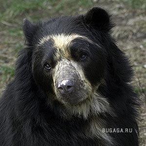Медвежонки!