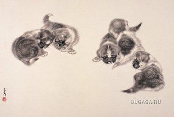 Кошки и собаки от Mi Chunmao.