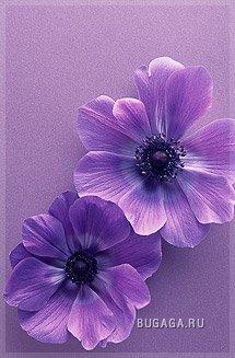 Мир в фиолетовом свете 2