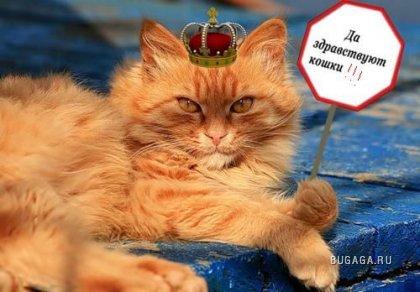 Для чего полезны кошки!