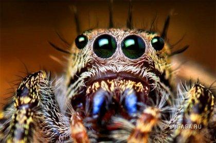Несколько интересных фактов о пауках