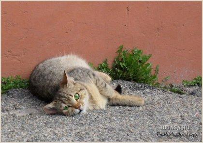 Дети и кошки от Инги Рескаленко