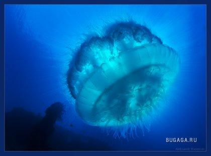 Подводный мир Александра Мариничева