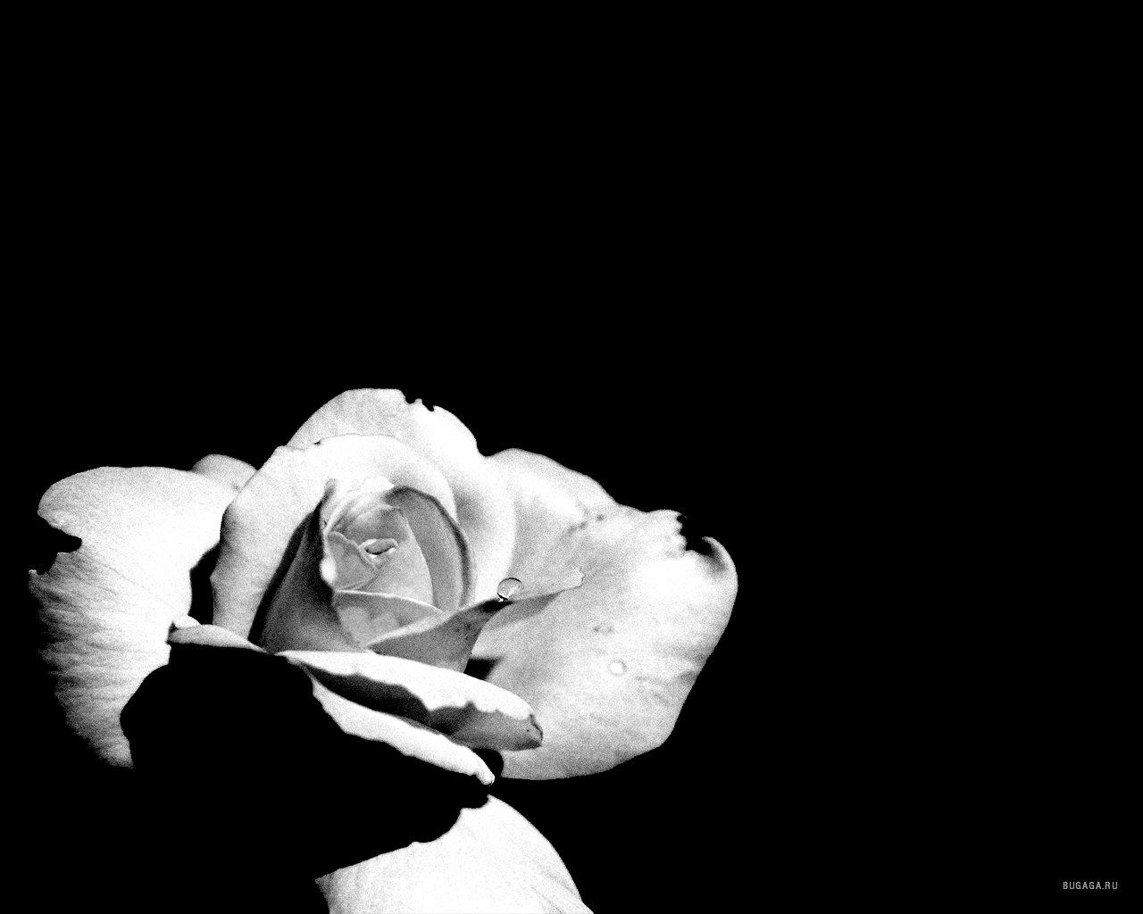 черно-белые креативные картинки