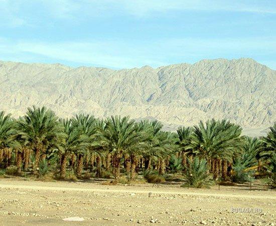 Самые большие пустыни мира изоражения