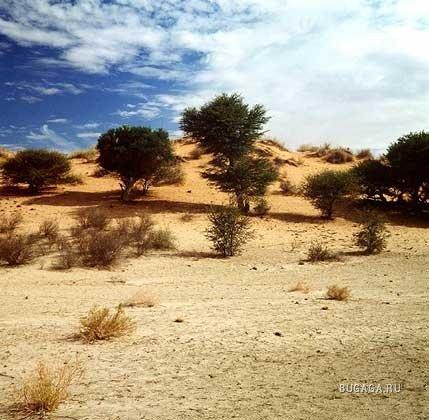Самые большие пустыни мира рекомендации