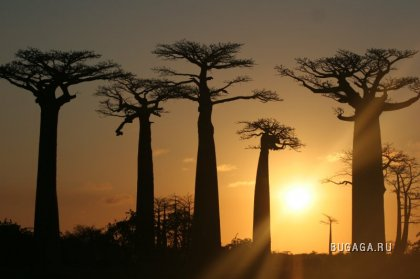 Африка. Мадагаскар