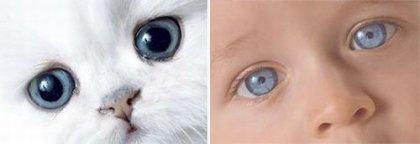Котята и детки )