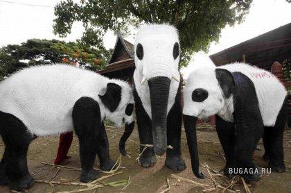 Слоны превратились в панд в знак протеста