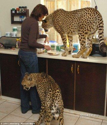 Домашние животные..?
