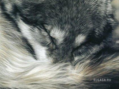 Животные от художника Lesley Harrison
