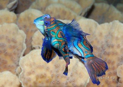Яркий мир кораллов